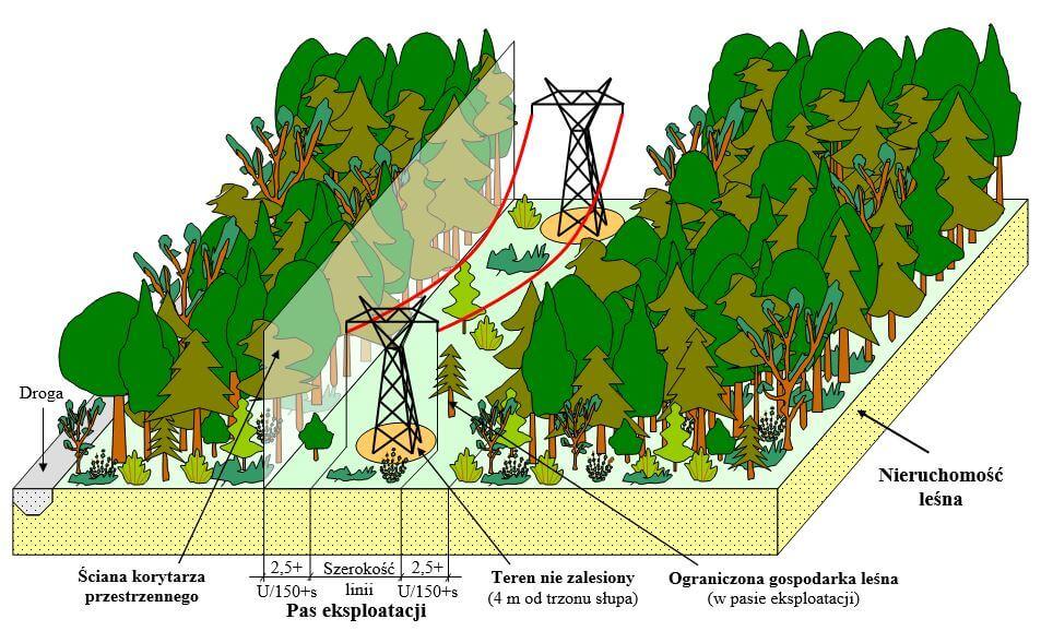 Rysynek pasa służebności przesyłu dla obszarów leśnych