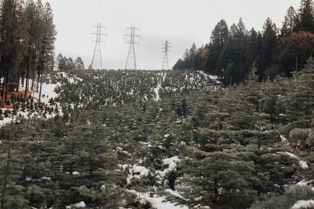 Pas służebności przesyłu na gruntach leśnych.